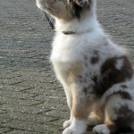 De leergierige pup