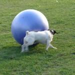 Treibball2